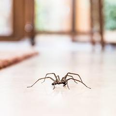 Produits contre les araignées