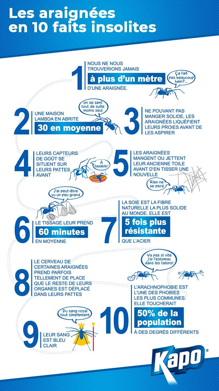 10 faits insolites sur les araignées