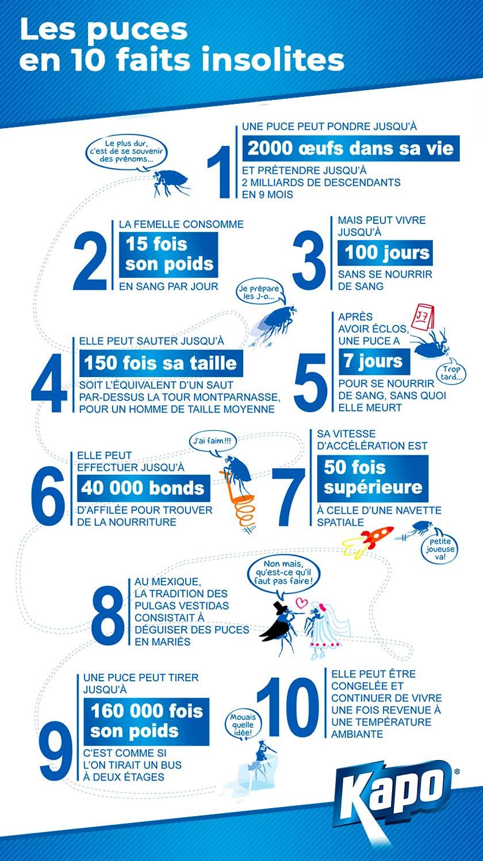 Infographie 10 faits insolites sur les puces