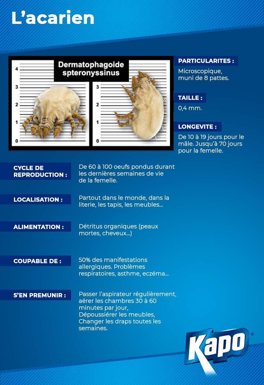 Infographie : fiche d'identité de l'acarien