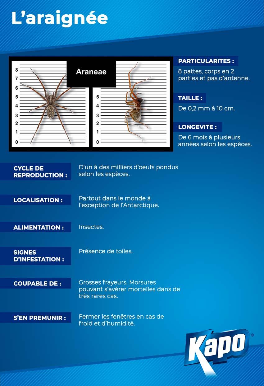 Infographie Fiche d'identité de l'araignée